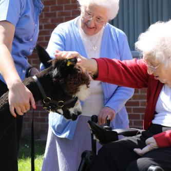 Residents with alpaca